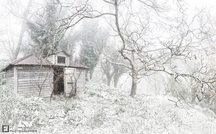 Nel Bosco by Fabio Lamanna on 500px  #calabria #fabio #italy #lamanna #snow #fog #amato #nikon #white #magic #nicepic #natgeo #fabio #travel #mountain