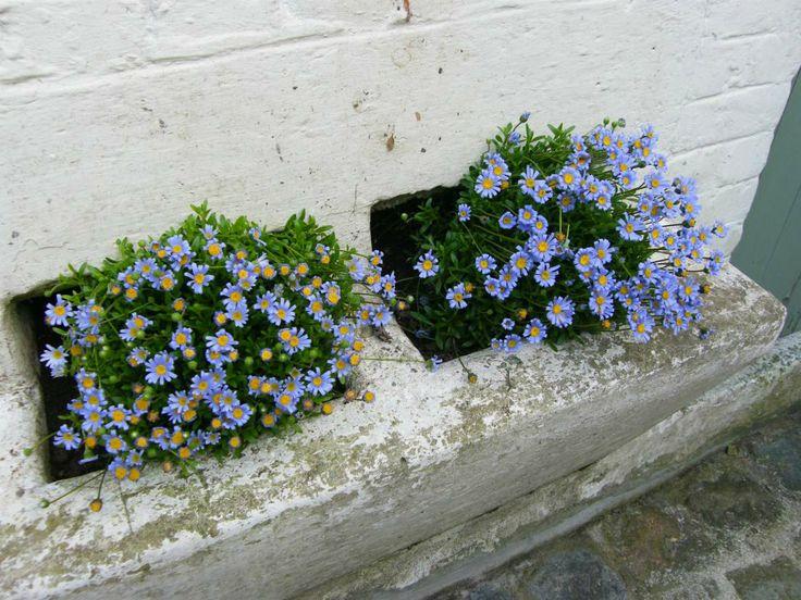 Des bacs remplis de fleurs