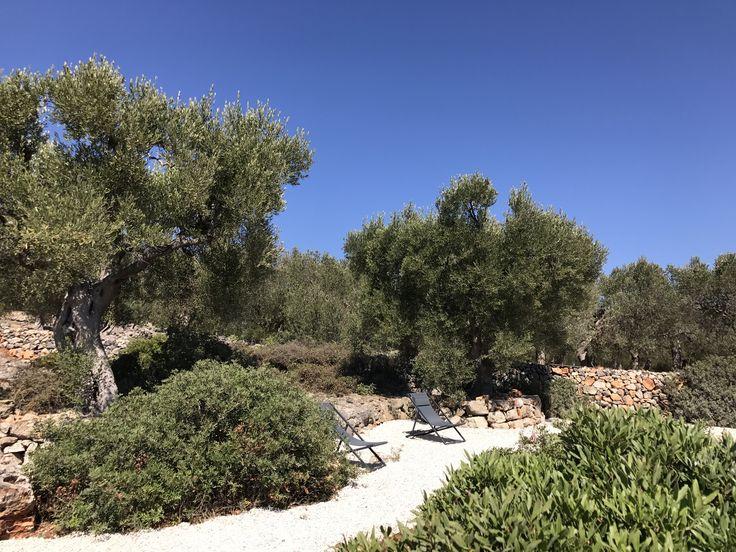 Apulian Garden Olive Tree Mediterranean Garden Masseria Puglia Apulian Place Puglia architecture Puglia Accomodation Luxury Villa Apulia