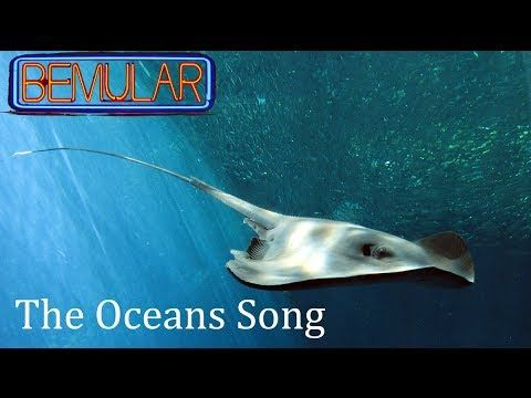 """▶ YouTube """"Bemular- The Oceans Song"""" - Really great to learn all about each ocean- love!"""
