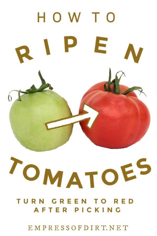 How To Ripen Tomatoes After Picking Empress Of Dirt How To Ripen Tomatoes Green Tomatoes Canning Tomatoes