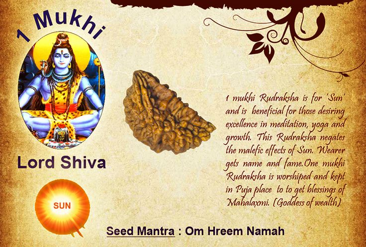 Benefits of 1 mukhi: Seed Mantra: Om Hreem Namah 1 mukhi Rudraksha is for 'Sun' and is beneficial for those desiring excellence in meditation, yoga and growth. This Rudraksha negates the malefic effects of Sun. Wearer gets name and fame.One mukhi Rudraksha is worshiped and kept in Puja place to to get blessings of Mahalaxmi. (Goddess of wealth) http://www.rudralife.com/Rudraksha/details.php?id=8