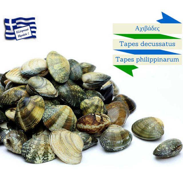 Ελληνικές Αχιβάδες-Tapes decussatus & Tapes philippinarum Σύντομα διαθέσιμες στο eshop.  #mydagora #ΕλληνικάΜύδια #Μύδια #greece #όστρακα