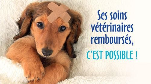 Assurance pour chien et chat