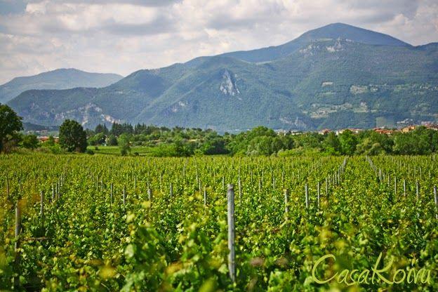 franciacorta italy | CasaKoivu: A postcard from Franciacorta