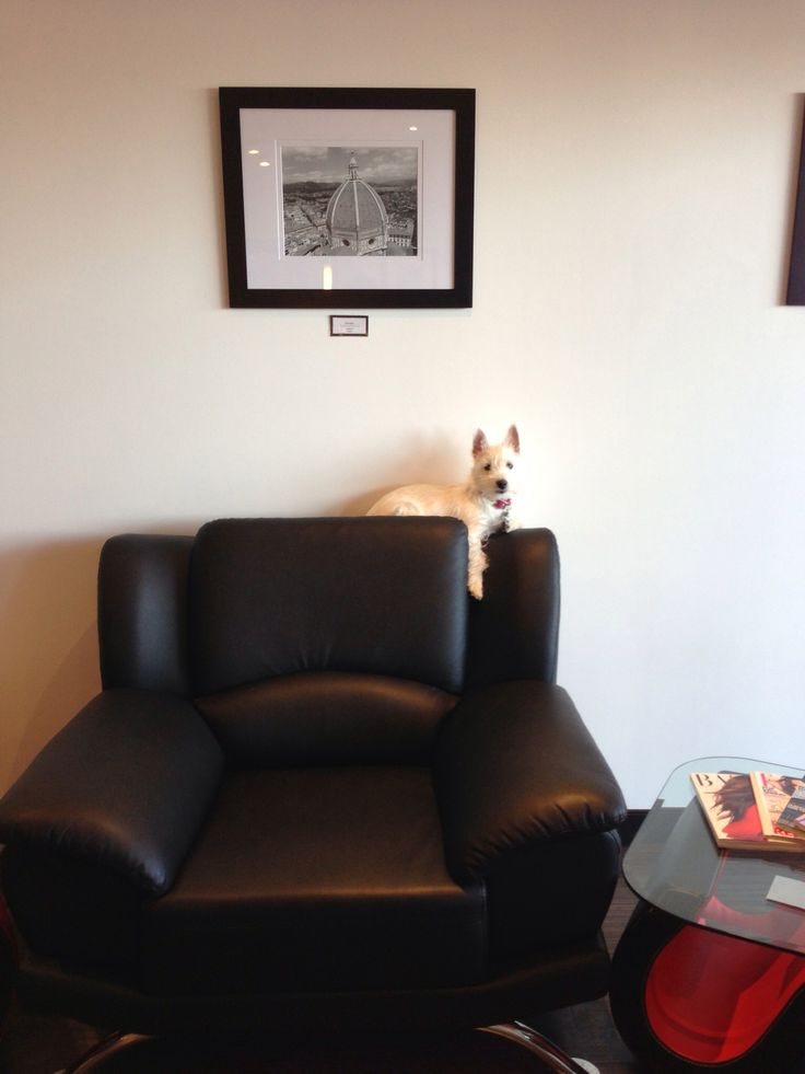 Oxley's favorite resting spot in the salon :)