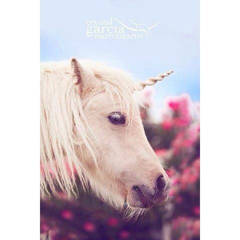 Unicorn Horn for Horses and Ponies: realistic unicorn bridle attachment