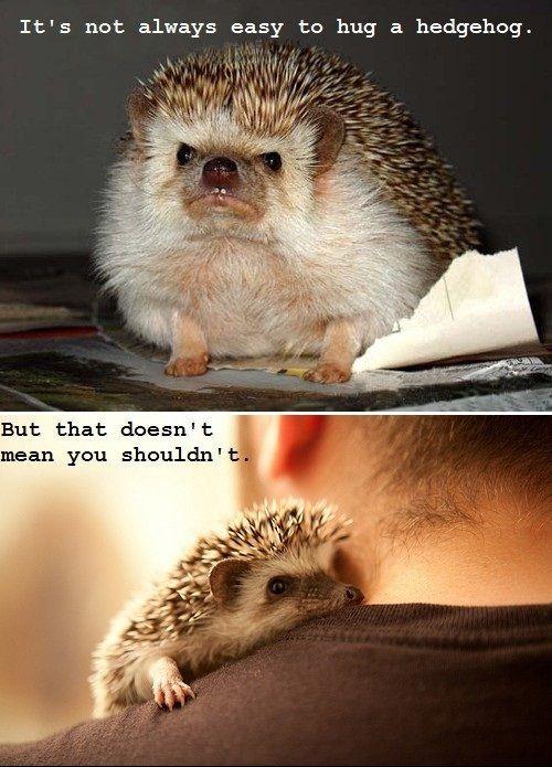 .Awww, Stuff, Pets, Funny, Adorable, Things, Hedges Hog, Hedgehogs Hug, Animal