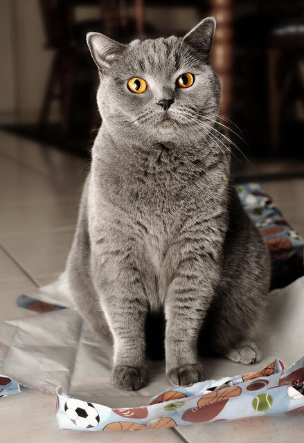 Paper, another cat trap. I would love a gray cat like this!