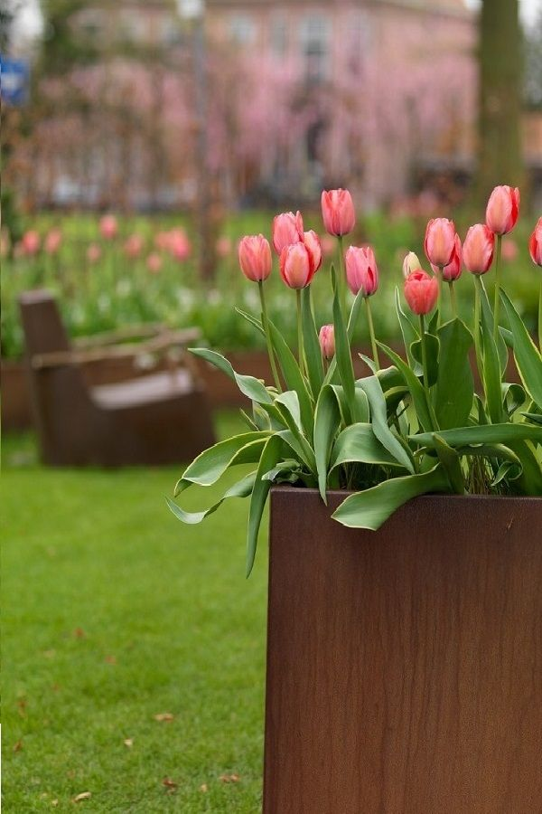 Amazing Gardening Inspiration With Tulips In Pots Containers And Flower Boxes Tulips Flowers Garden Inspiration
