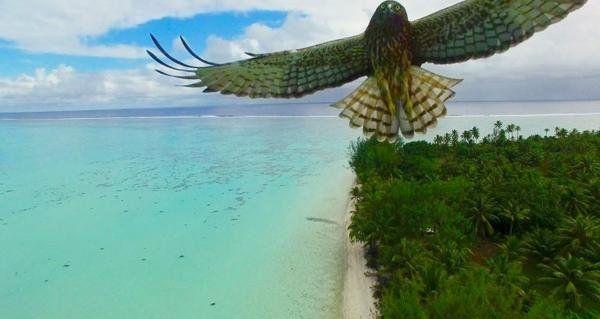 雅虎科技新聞: 2016最佳無人機攝影作品 - Yahoo奇摩新聞 - 在法屬玻里尼西亞上的猛禽襲擊無人機