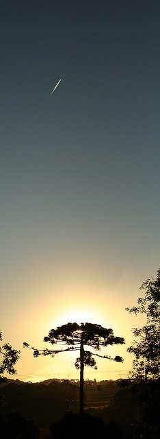 Araucaria & Sunset, Curitiba, sBrazil.