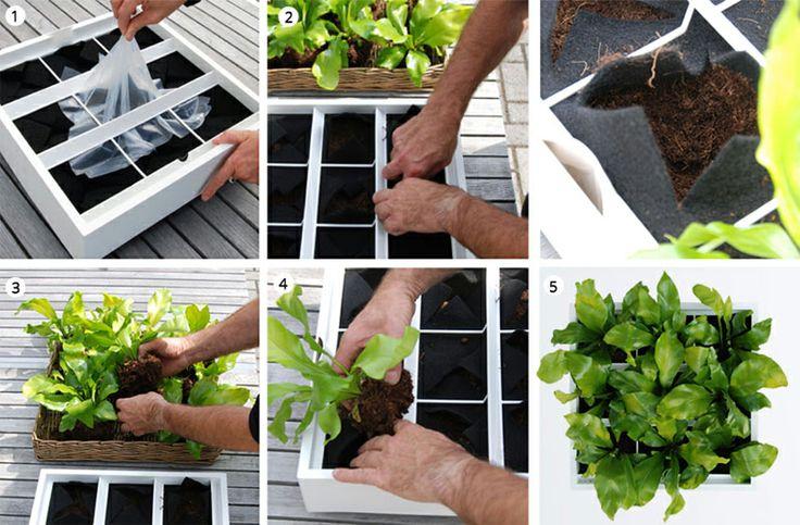 KROK 2: Miejsce  Ostrożnie usuń folię z modułu i rozchyl rogi filcowych kieszonek. Wyciągnij roślinę z doniczki, uwolnij korzenie i usuń nadwyżkę gleby, następnie posadź roślinę w pożądanym przedziale i dociśnij korzenie.