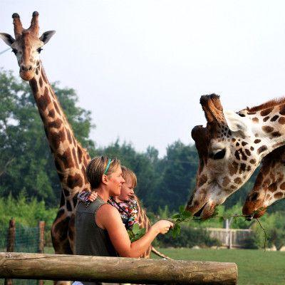 Séjour au zoo de Lisieux avec une nuit parmi les animaux merci mon chéri