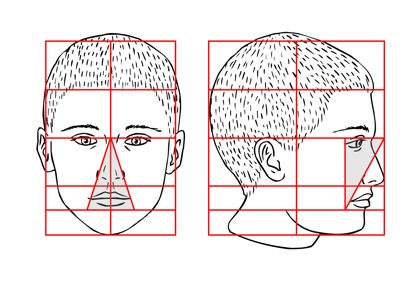 Proportions of the Head - Illus. 4