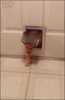 Portinha de gato | Onde Meu Gato Senta
