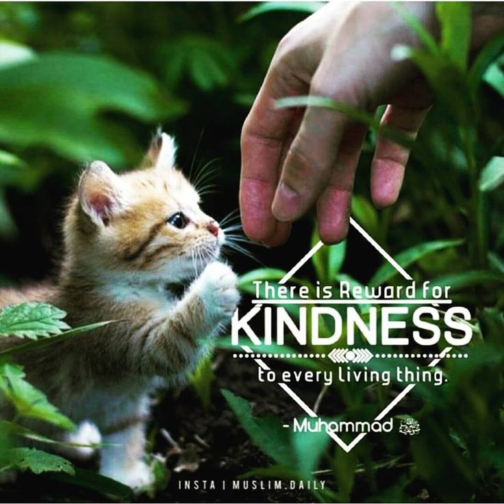 There is a reward for kindness in every living thing. – Prophet Muhammad [PBUH]