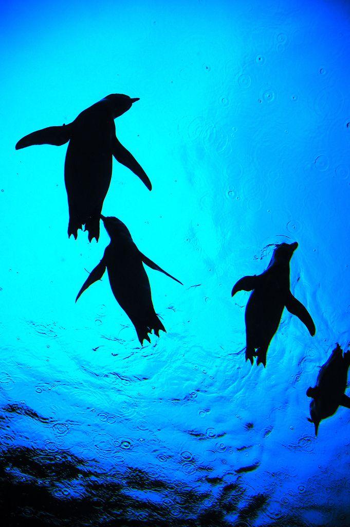 Flying penguin silhouettes