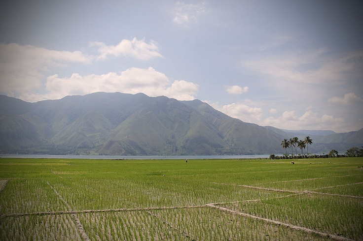 A vast green rice field stretching over the edge of the lake coupled with a picturesque mountain scape as its background, is truly a sight for sore eyes.