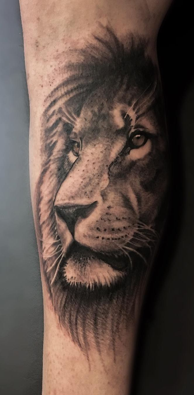 best lion tattoo images on pinterest