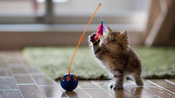 اجمل الصور للقطط في العالم خلفيات قطط متحركة للموبايل اجمل الصور للقطط الصغيرة في العالم قطط مكتوب عليها اجمل القطط الصغيرة Cat Supplies Cute Cats Cat Toys