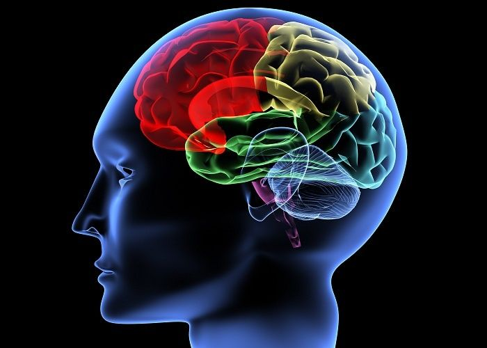 Video Series; Neurological Conditions and Disorders - See more at: http://www.pedagogyeducation.com/Long-Term-Care-Home-Health-Campus/Class-Catalog/View-Entire-Catalog/Class.aspx?Class=252&cmp=H14