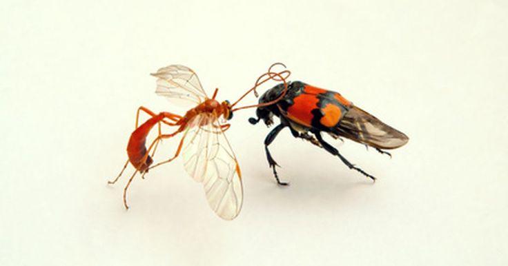 Tipos de ciclos de vida de insetos. Os insetos passam por um processo de metamorfose ao longo de seus ciclos de vida, com mudanças físicas nas cores, formatos e tamanhos. Dependendo do inseto, o processo pode ser completo ou incompleto. A reprodução geralmente ocorre na maioria deles quando os machos fertilizam os ovos das fêmeas. Outros se reproduzem de maneira assexuada, e há ...