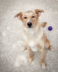 Akayla is an adoptable Collie Dog in Winnipeg, MB. Please remember to bring a leash and collar when you come to get your new best friend. We are running short!. Thanks and hope to see you soon! * Sex:...