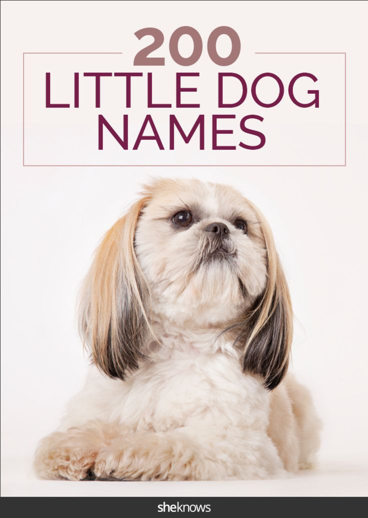 These cute dog names will give your little pup some