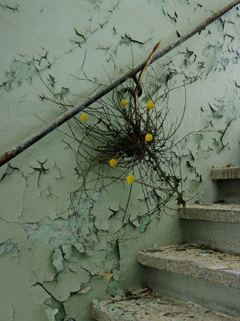 """From """"blumen ohne wasser (Flowers without water)"""" series by German photographer Maria Grossmann, in collaboration with Monika Schürle. Nice contrast of nature vs. manmade, life vs. decay..."""