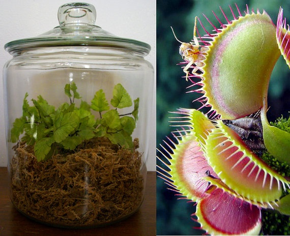 Pin Venus Fly Trap Plant Diagram On Pinterest