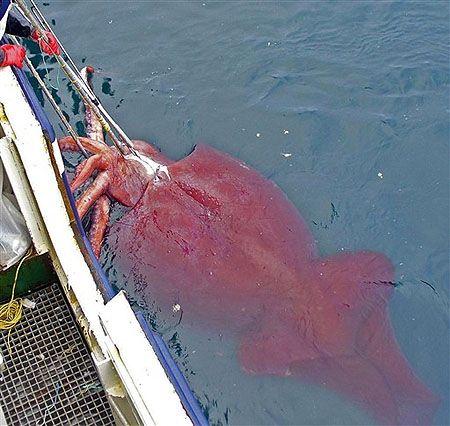 10 animaux effrayants vivants dans l'eau!   estFunny!