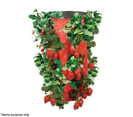 Awesome Hanging Strawberry Planter Upside Down Plant Fixture. Eye catching and relaxing to look at.