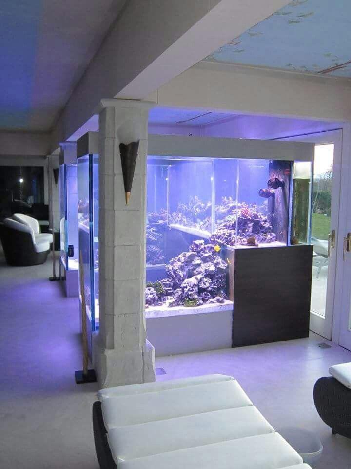 10 best images about amazing fish tanks on pinterest glass aquarium saltwater aquarium and - Fish tank partition wall ...