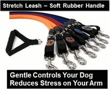 17 Best Images About Lighted Collars Amp Leashes On