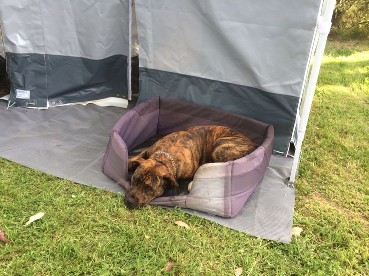 Leroy Jenkins not allowed in the tent