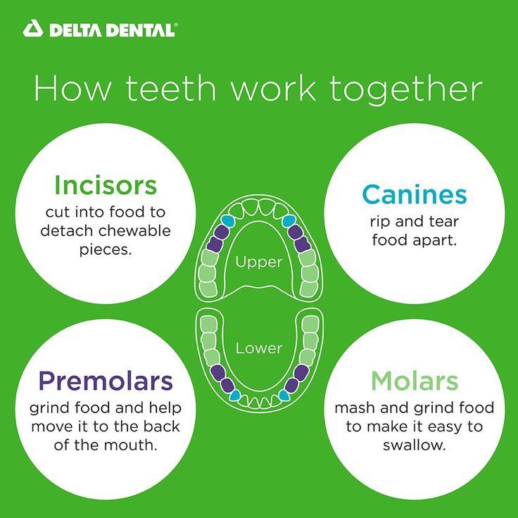 Delta dental of mo on twitter in 2020 pediatric