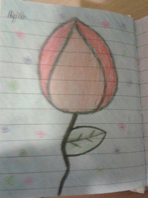 ~~Tulips~~By Aqila