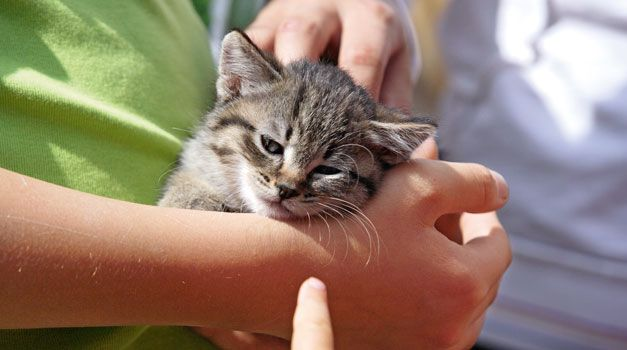Baby animals: Farm cats discover the world around the Red Rooster farms in South Tyrol (Italy)