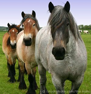 We plan on having horses later too. We probably will not get to have them until we have saved up enough money to get them, but I love horses and can't wait to have them!