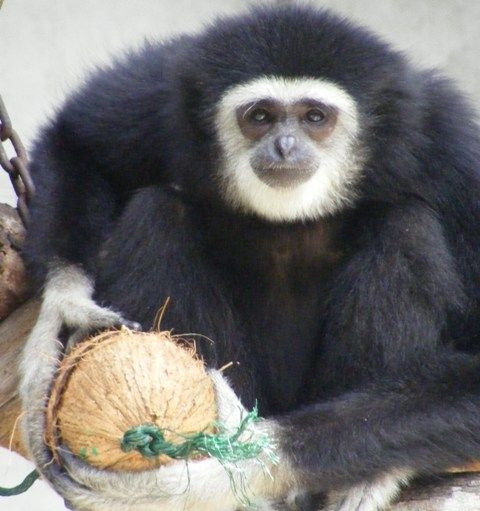 What a cool looking little guy http://www.oysterworldwide.com/gap-year/zoo-assistant-internship-in-malaysia/