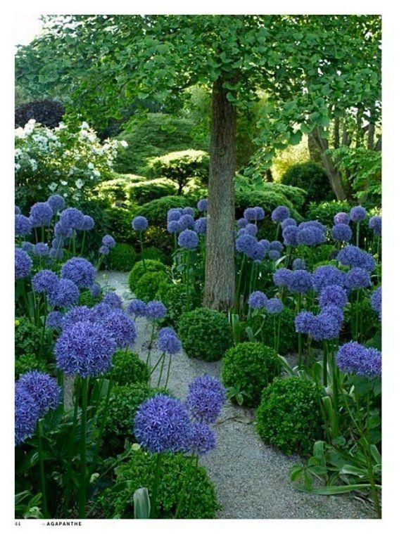 Giant Allium, oh so special.