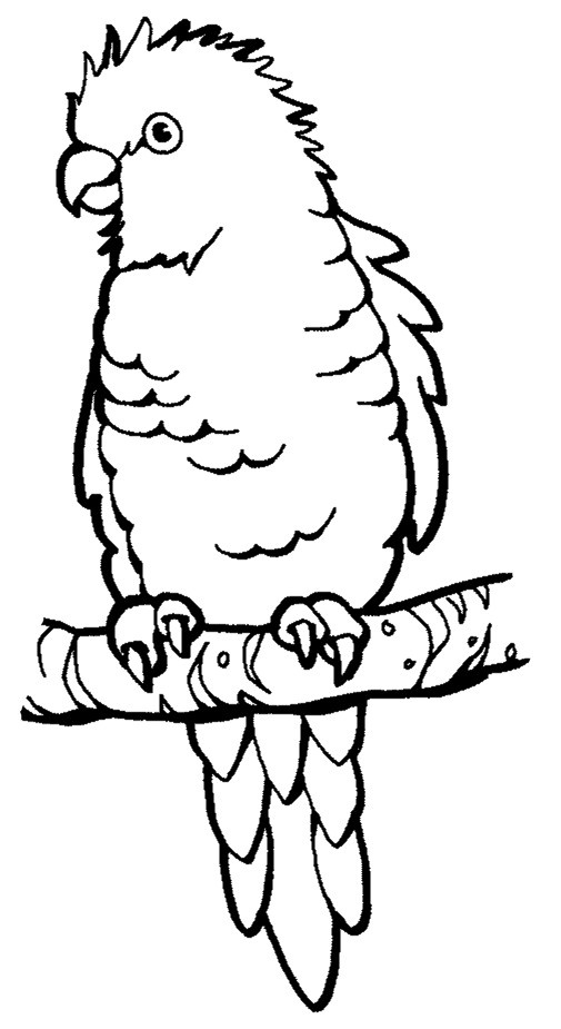 Perched Parrot Coloring Page From Parrots Category Select 24104 Printable Crafts Of Cartoons Nature Animals Bible And Many More