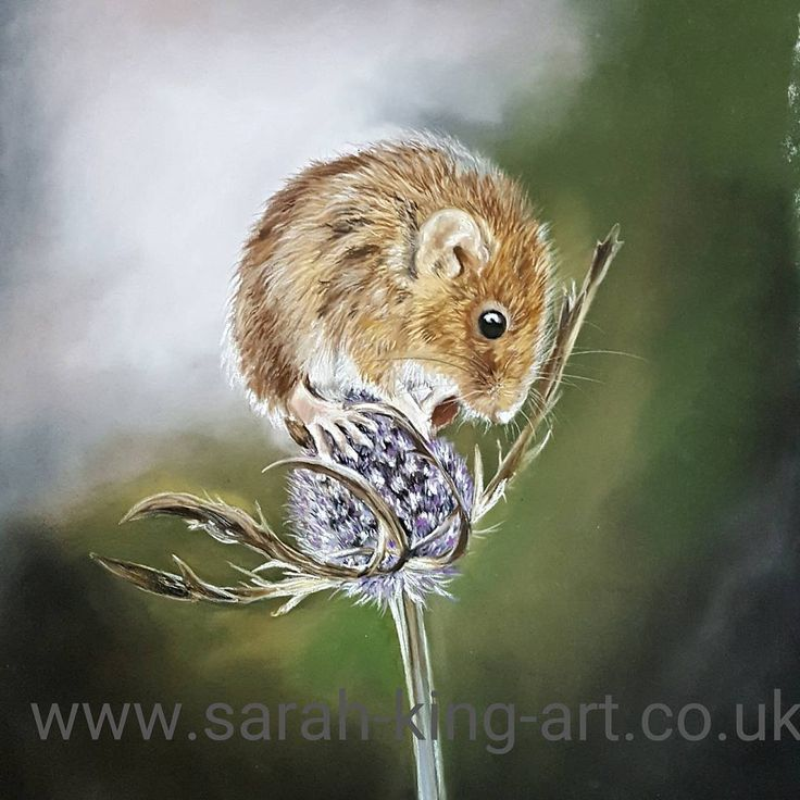 """""""Mi piace"""": 34, commenti: 1 - Sarah King (@sarah_king_art) su Instagram: """"Mouse is finished.. needs a name. Thanks to Paul fine for the great reference #originalart…"""""""