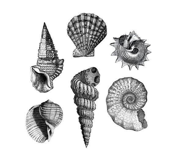 """""""She Sells Seashells"""" Six lovely vintage seas…"""