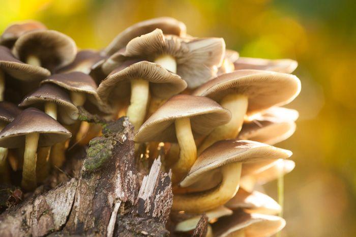 7 tips voor het fotograferen van de herfst