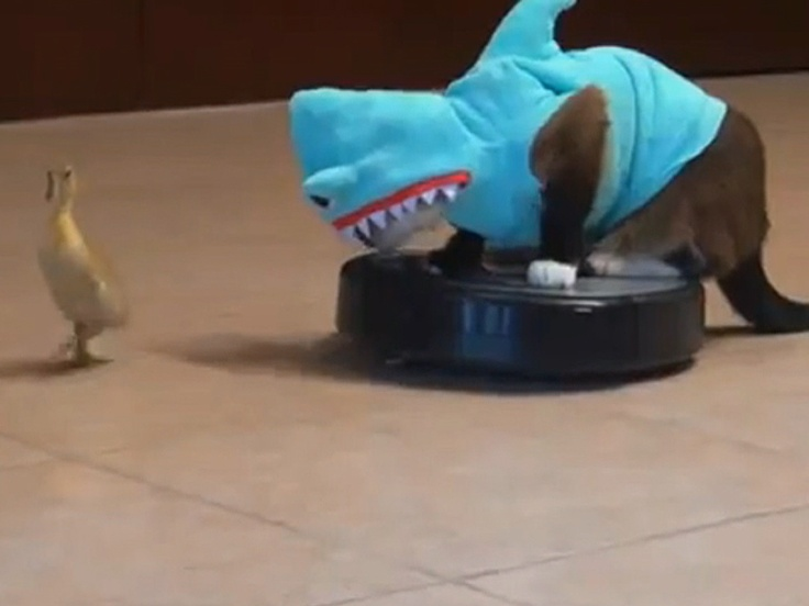 A cat... in a shark costume... on a Roomba... chasing a duckling. OVERWHELMING in awesomeness.