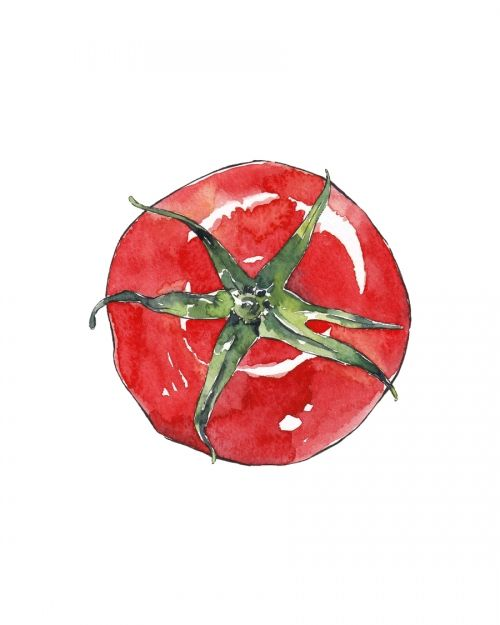 TOMATO - watercolor illustration for the Kitchen by Good Objects