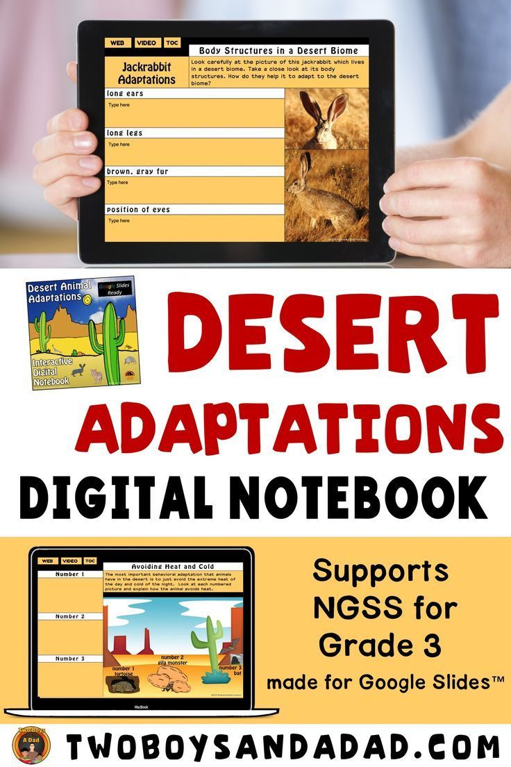 Desert Animal Adaptations Interactive Notebook for Google