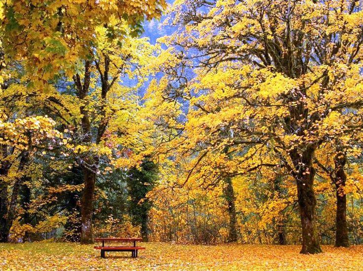 Gambar Musim Gugur - Daun Yang Berubah Warna